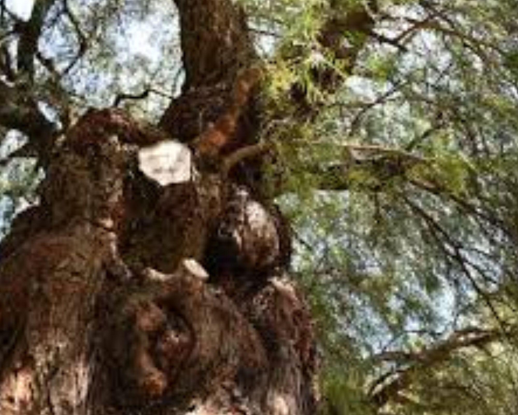 leyendas mexicanas árbol