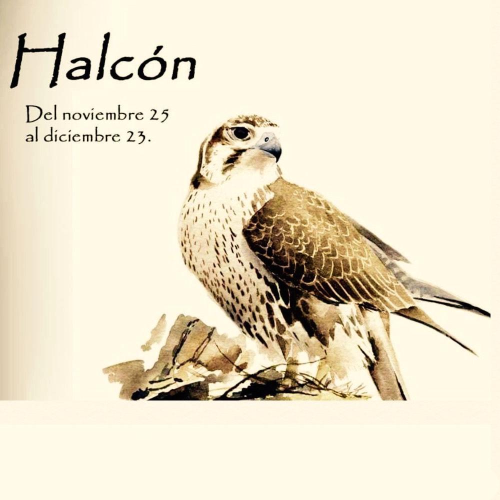 Horóscopo Celta halcón