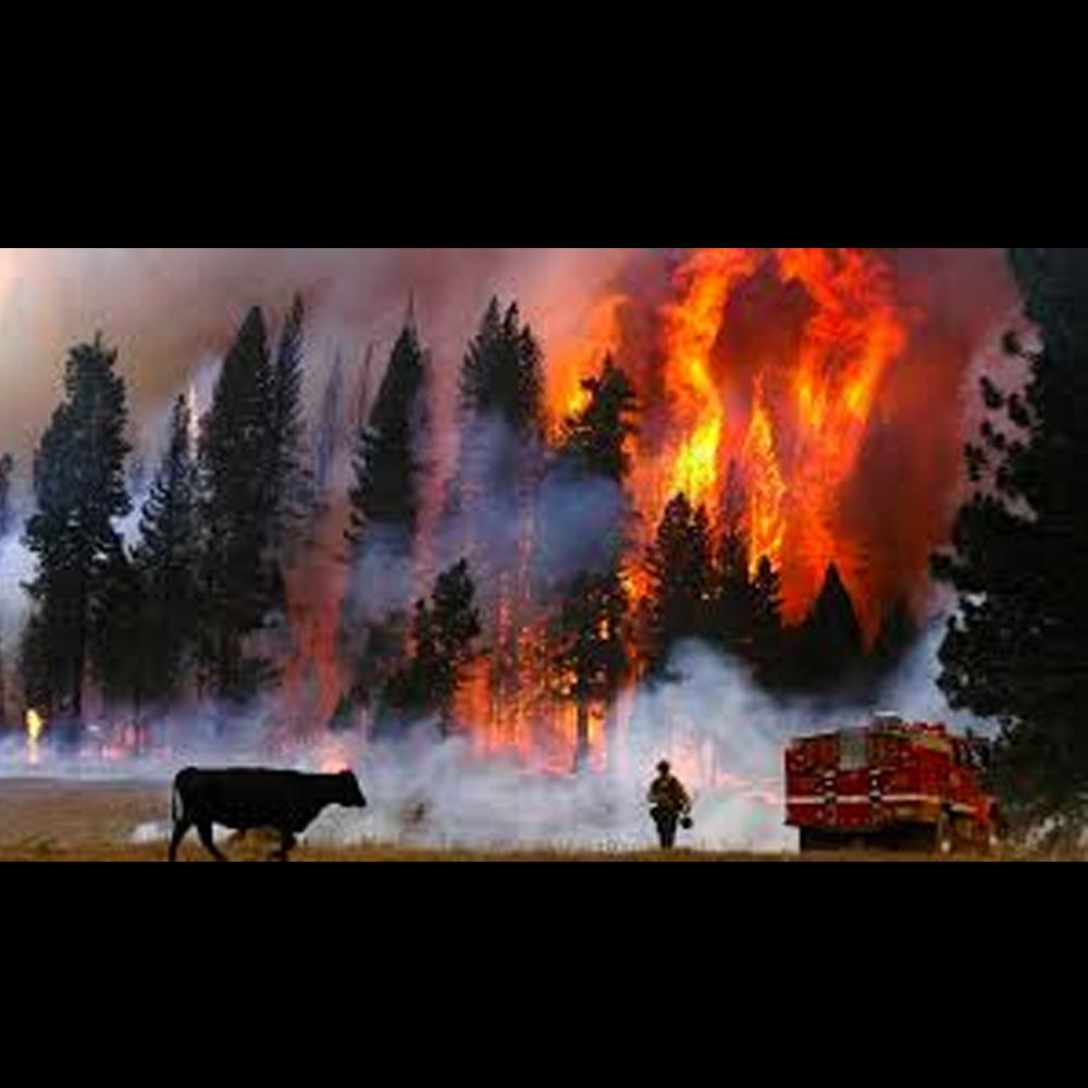 incendios bosque
