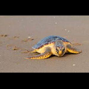 tortugas cara