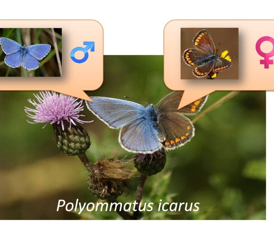animales mariposa