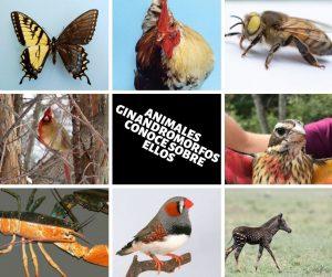 animales presentación