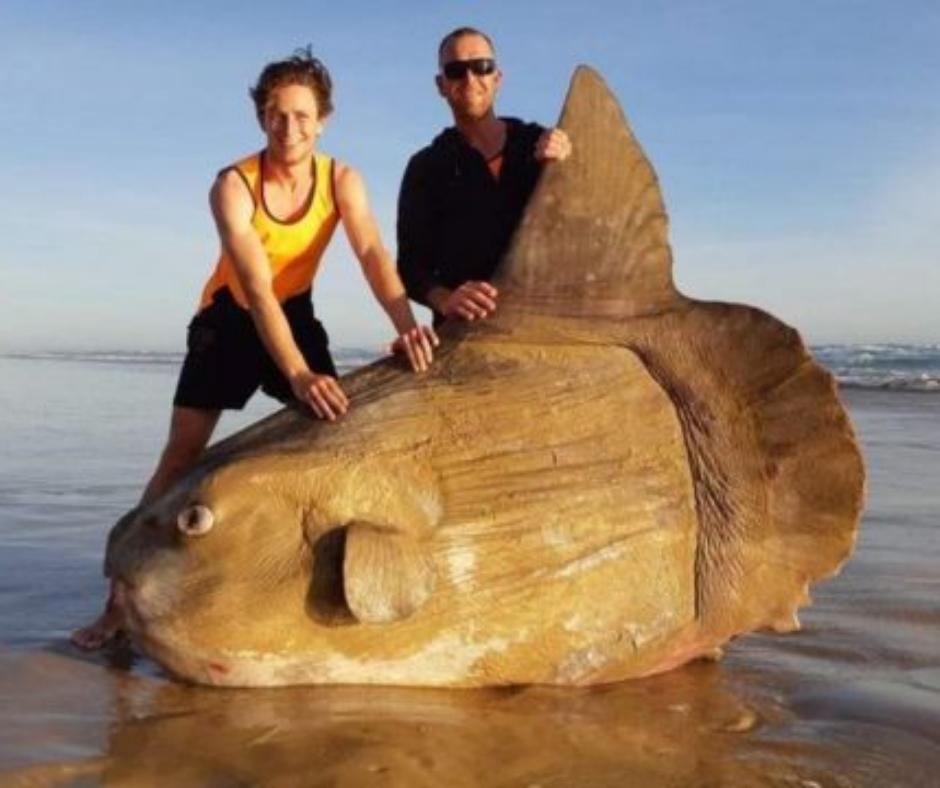 peces exóticos pez grande