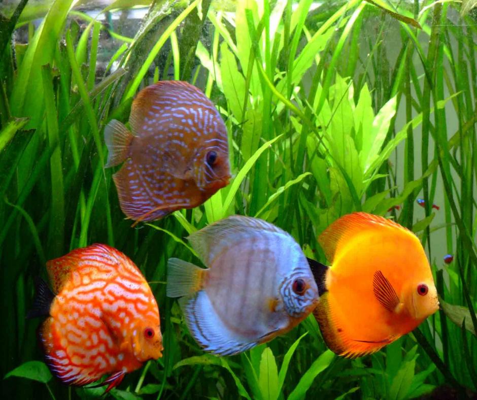 peces exóticos peces