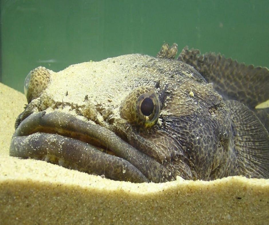 peces exóticos pez