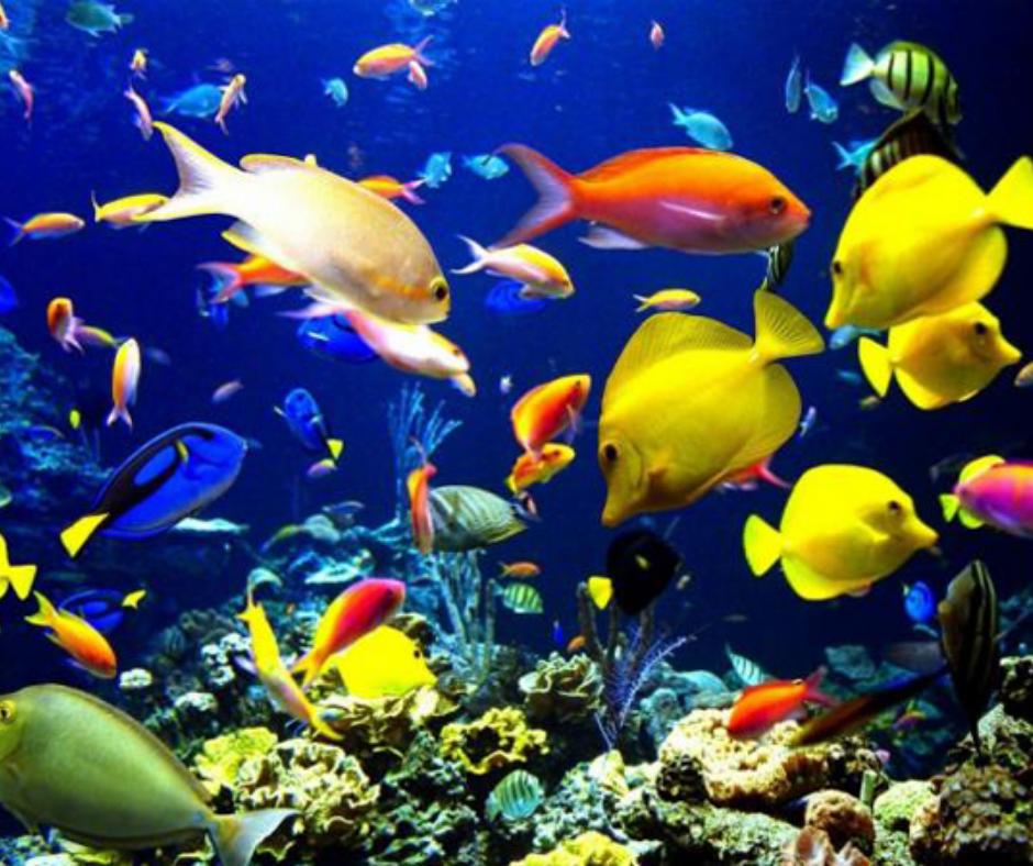 peces exóticos pescados